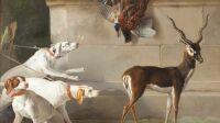 exposition-les animaux du roi-chateau de versailles-Trois chiens devant une antilope-Jean Baptiste Oudry